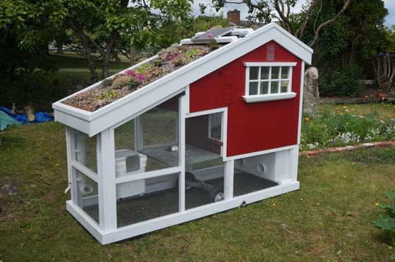 diy-chicken-coop-projects-HDI-1