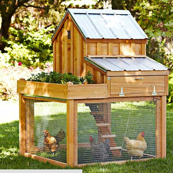 diy-chicken-coop-projects-HDI-10