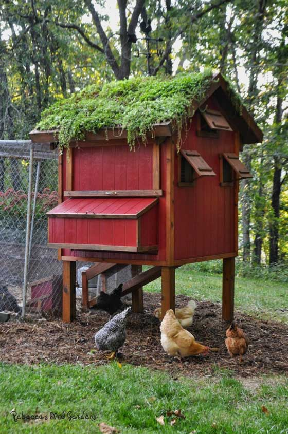 diy-chicken-coop-projects-HDI-12