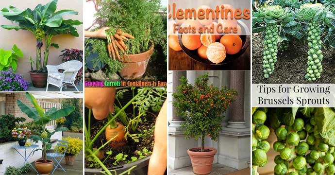 Top 26 Exciting Ideas To Grow Potted Veggies and Fruits