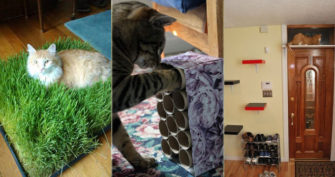 21 Genius Hacks Cat Owners Will Love Instantly