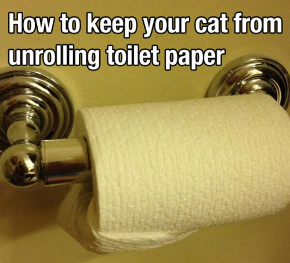 How to Keep Your Cat from Unrolling Toilet Paper