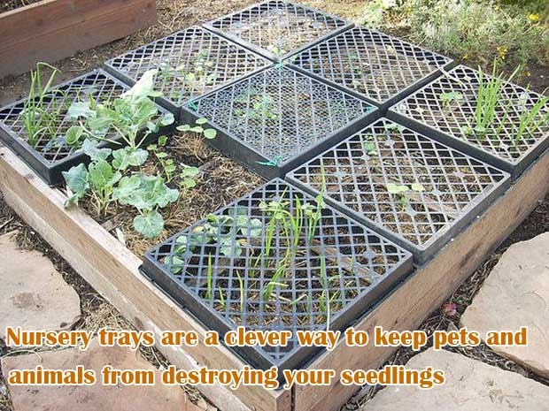 N to keep pets and animals from destroying your seedlings
