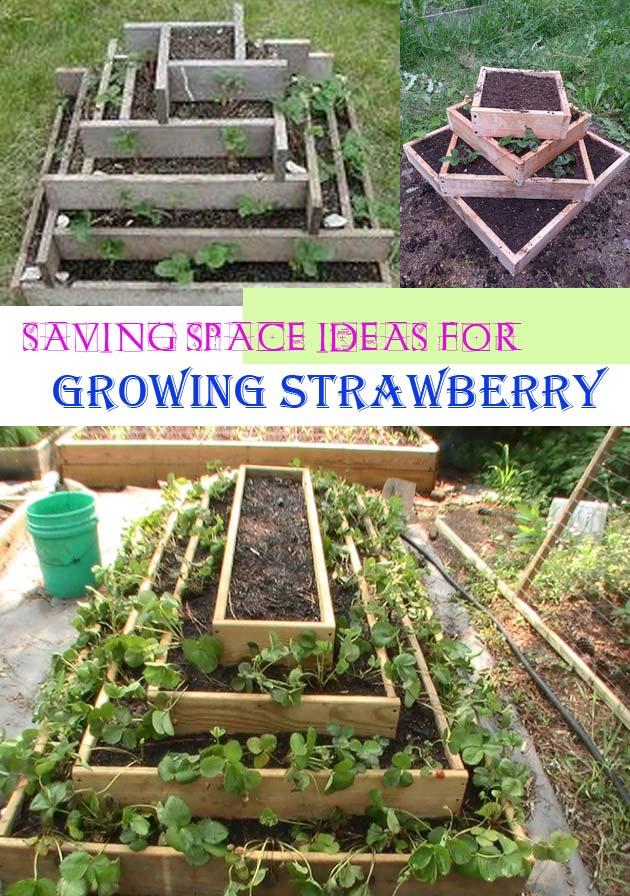 Pyramid strawberry planter